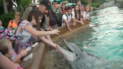 Breemersch feeding dolphins